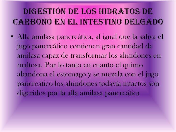 Digestión de los hidratos decarbono en el intestino delgado• Alfa amilasa pancreática, al igual que la saliva el  jugo pan...