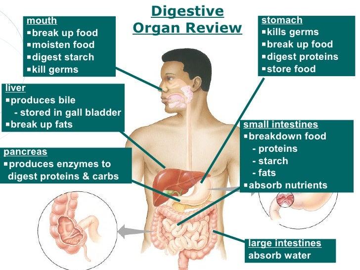 digestion, Cephalic Vein