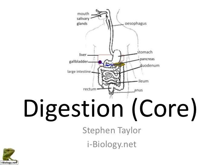 Digestion (Core)     Stephen Taylor      i-Biology.net