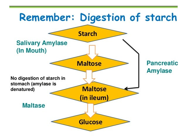 digestion of starch takes place in