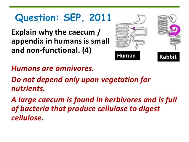 Why cant humans digest cellulose?
