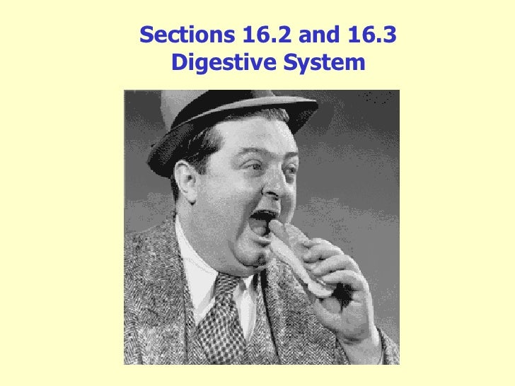 Sections 16.2 and 16.3 Digestive System