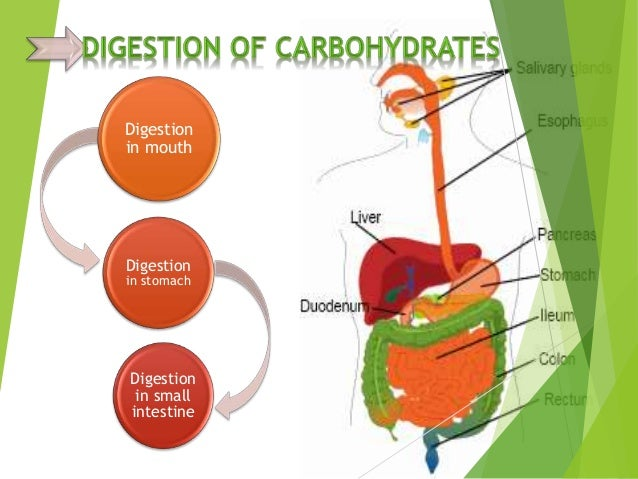 digestion and absorption of carbohydrates biology essay Carbohydrates, proteins, and fats - explore from the merck manuals - medical   carbohydrates, proteins, and fats are digested in the intestine, where they are.