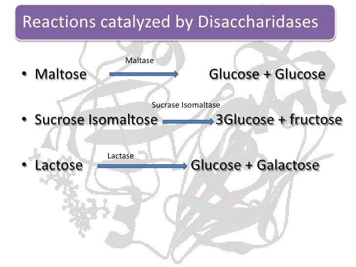 Digestion and absorption of carbohydrates