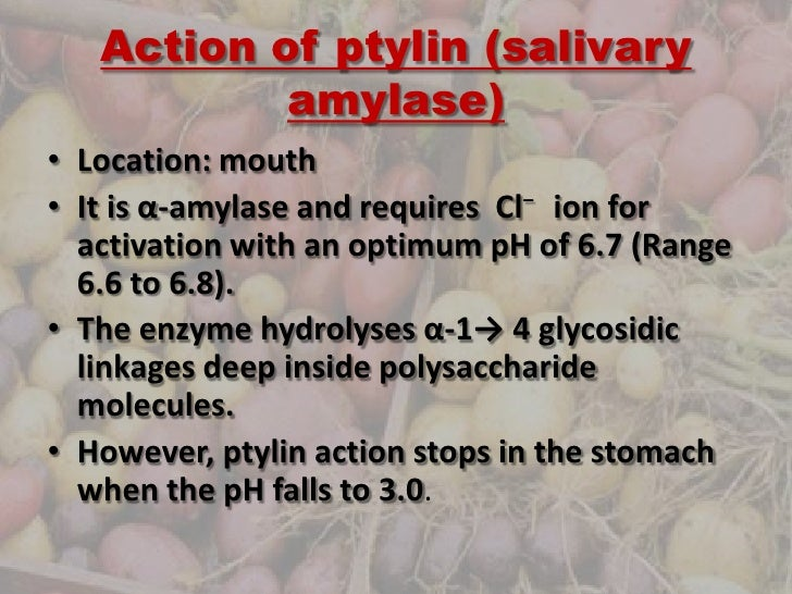 salivary amylase and starch Investigate the effect of temperature on amylase activityintroduction amylase is an enzyme that catalyses the breakdown of starch into sugars amylases are f.