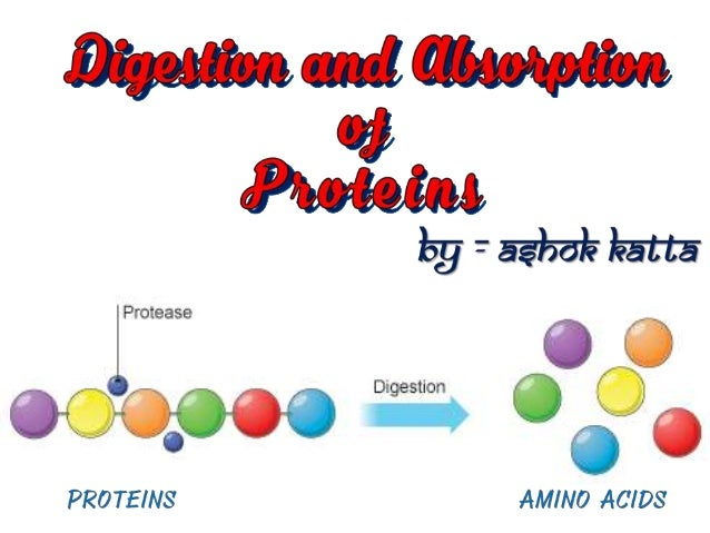 Proteins, the primary constituents of the body.  A regular & adequate supply of protein in the diet is essential for ce...