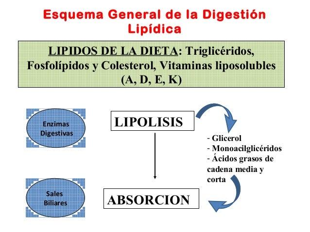 los esteroides como funcionan en el organismo