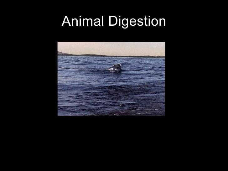Animal Digestion
