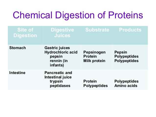 produces lipids and steroids