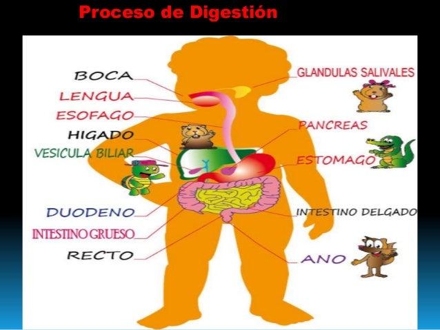 Proceso de Digestion Norlaidy Arape