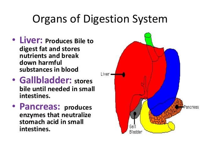 Digestion system Slide 3