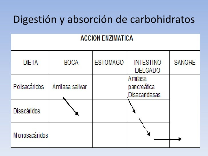Digestion y absorcion de carbohidratos,proteinas,lipidos