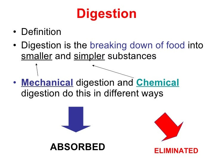 digestive system, Human Body