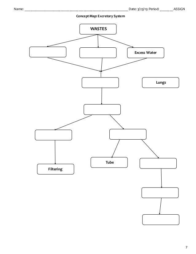 Diagram Of Nephron 15 3