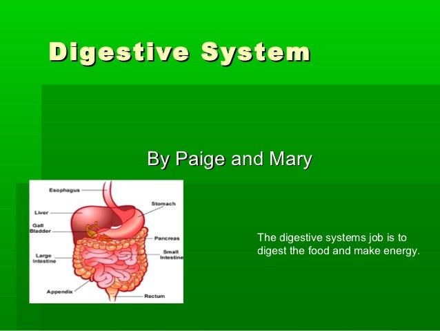 Digestive System      By Paige and Mary                 The digestive systems job is to                 digest the food an...