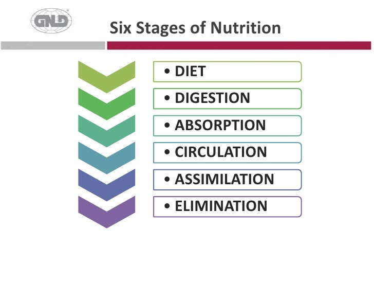 Six Stages of Nutrition<br />