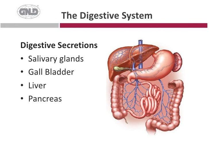 The Digestive System<br />Digestive Secretions<br />Salivary glands<br />Gall Bladder<br />Liver<br />Pancreas<br />