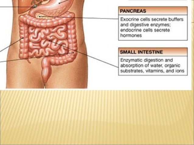 Grade 8 digestive system an inflammation in liver caused by virus infection ccuart Image collections