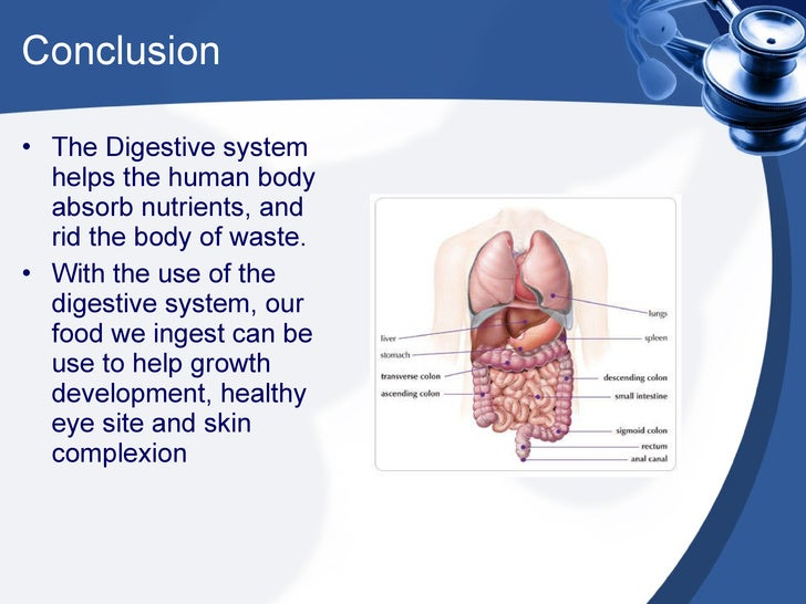 human digestion coursework The pancreas secretes digestive enzymes into the small intestine to complete the chemical digestion of foods large intestine the large intestine is a long, thick tube about 25 inches in diameter and about 5 feet long.