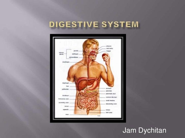Digestive System<br />Jam Dychitan<br />