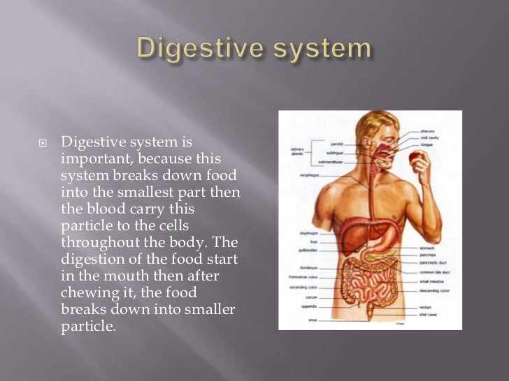 Digestive system<br />Digestive system is important, because this system breaks down food into the smallest part then the ...