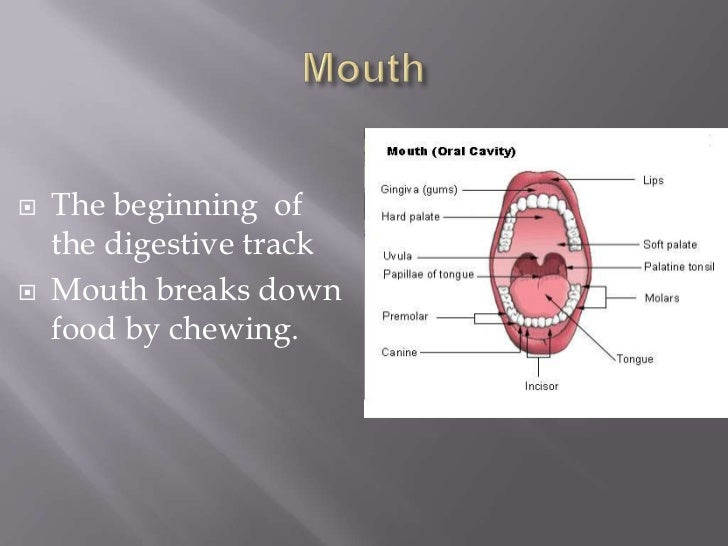 Mouth<br />The beginning  of the digestive track<br />Mouth breaks down food by chewing.<br />