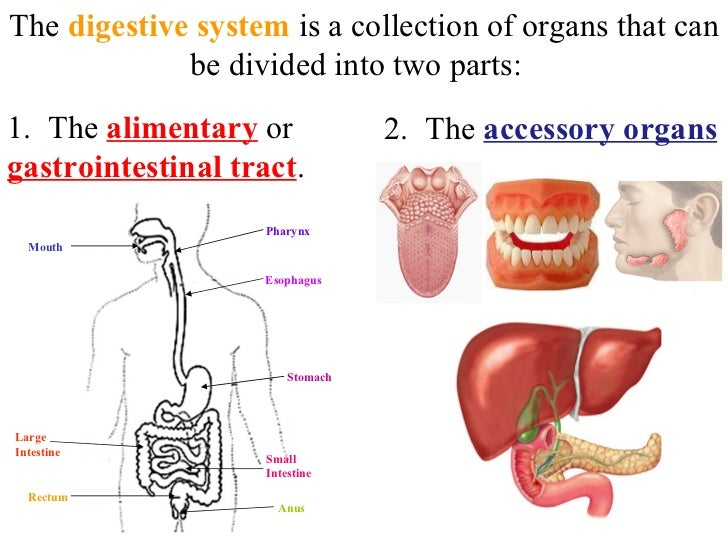 digestive system travel guide While traveling, it's important to pay attention to your gut and digestive system for a smooth journey here are some tips for staying healthy and.