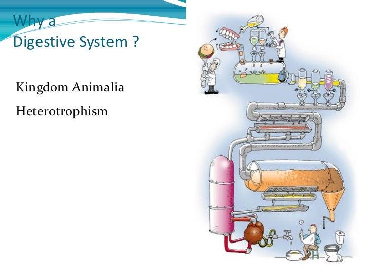 Why aDigestive System ?Kingdom AnimaliaHeterotrophism