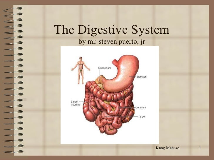The Digestive System    by mr. steven puerto, jr                               Kang Maheso   1