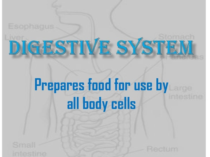 Prepares food for use by     all body cells