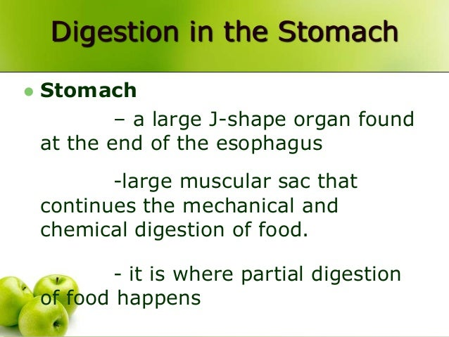 Muscular Organ That Carries Food Bolus To Stomach
