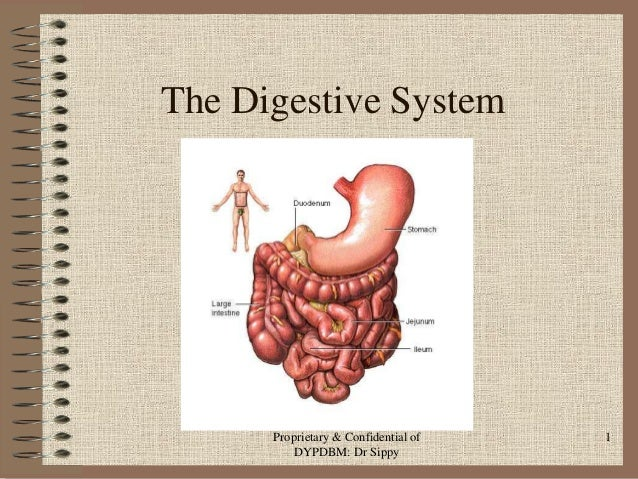 The Digestive System  Proprietary & Confidential of DYPDBM: Dr Sippy  1