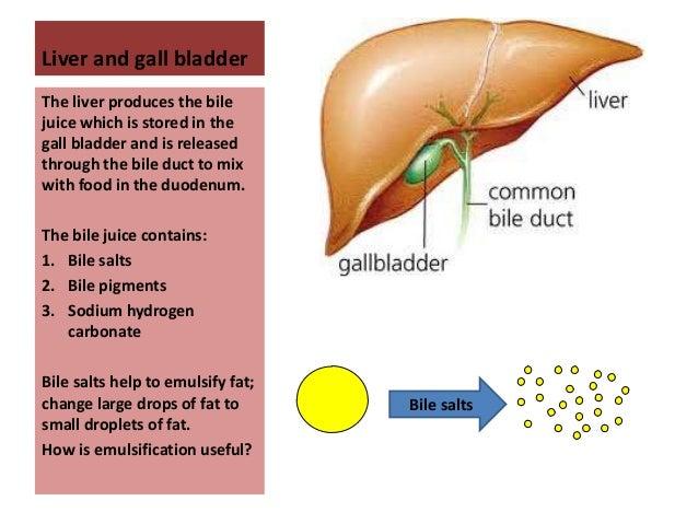 digestive system, Cephalic Vein