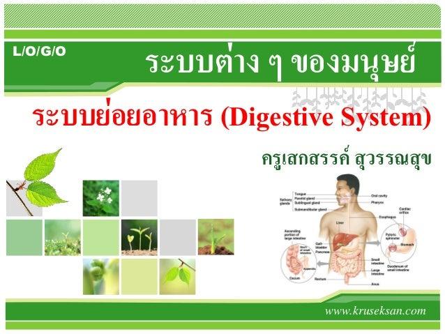 L/O/G/O ระบบต่าง ๆ ของมนุษย์ www.kruseksan.com ระบบย่อยอาหาร (Digestive System) ครูเสกสรรค์ สุวรรณสุข