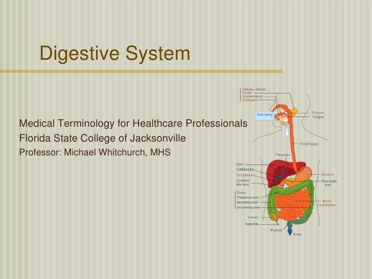Digestive SystemMedical Terminology for Healthcare ProfessionalsFlorida State College of JacksonvilleProfessor: Michael Wh...