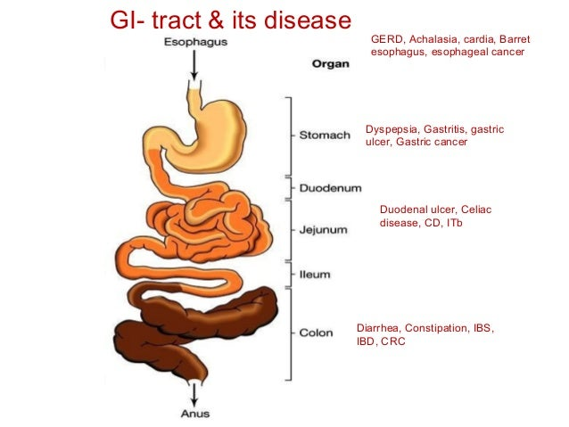 Infection diseases of gastrointestinal tract