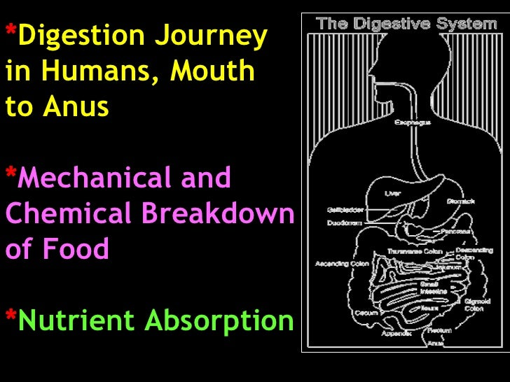 * Digestion Journey  in Humans, Mouth  to Anus * Mechanical and  Chemical Breakdown  of Food * Nutrient Absorption