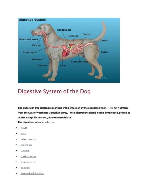 Digestive system (jane)