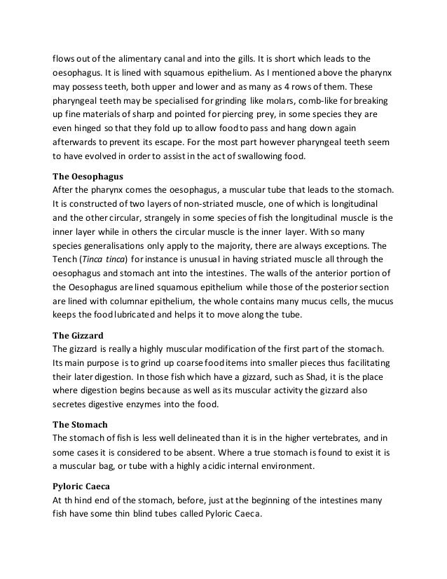 High School Persuasive Essay Topics  How To Write An Essay With A Thesis also How To Write An Essay For High School Students Digestive System Essay Essay On Business Management