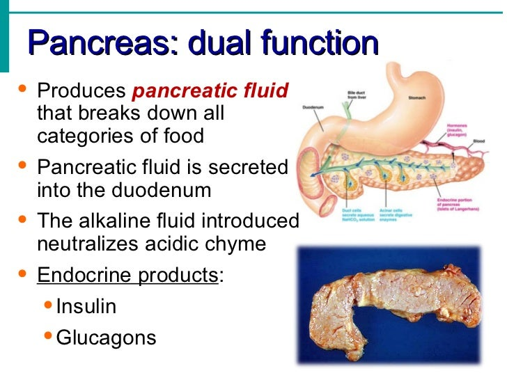 Function of the Pancreas