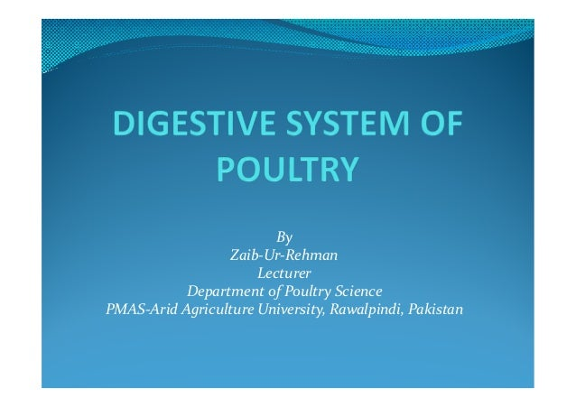 Digestive system of poultry avian physiology by zaib ur rehman lecturer department of poultry science pmas arid agriculture university digestive system this ccuart Gallery