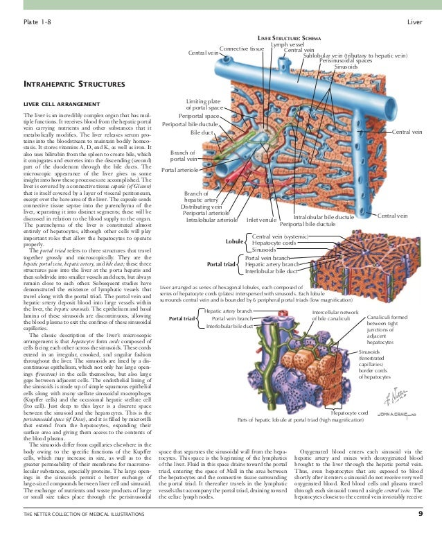 Liver: PART III 10 THE NETTER COLLECTION OF MEDICAL ILLUSTRATIONS Plate 1-9 VASCULAR DUCTAL RELATIONS AND LIVER LOBULES ...