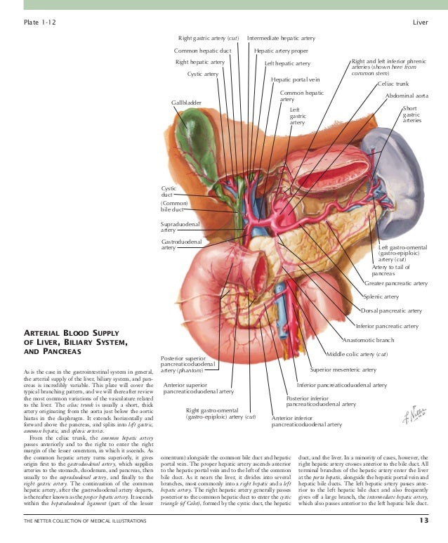 Liver: PART III 14 THE NETTER COLLECTION OF MEDICAL ILLUSTRATIONS accessory (6). If it is replaced, only the right hepati...