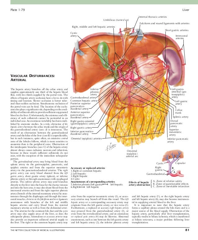 Digestive system  part 3 liver etc 2nd edition