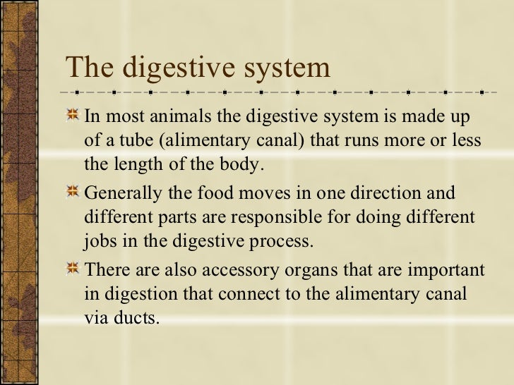 Picture Of Digestive System And Its Function Manual Guide