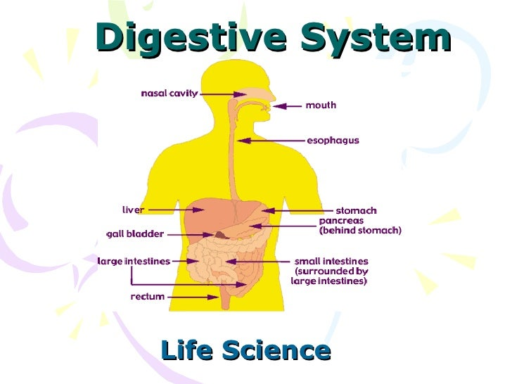 Digestive System Life Science