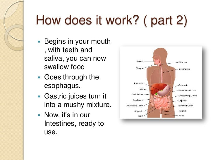 Digestive System Power Point