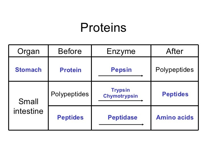 pepsin and protein essay Methods: soy protein hydrolysate was enzymatically produced using pepsin, with e/s (enzyme to substrate ratio) of 05% (250 u/mg) and hydrolysis time of 4h afterwards, the sph effects on murine spleen lymphocyte proliferation, and peritoneal macrophage phagocytosis were investigated in vitro.