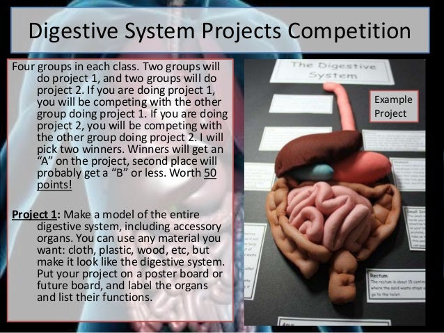 Digestive System Projects CompetitionFour groups in each class. Two groups willdo project 1, and two groups will doproject...