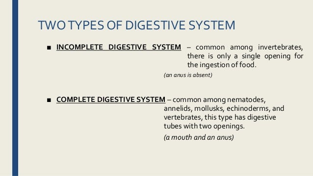 Digestive System K Lesson